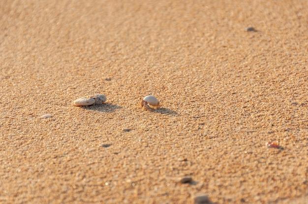 Mały ziemski krab pustelnik chodzący po piasku oświetlonym światłem zachodu słońca