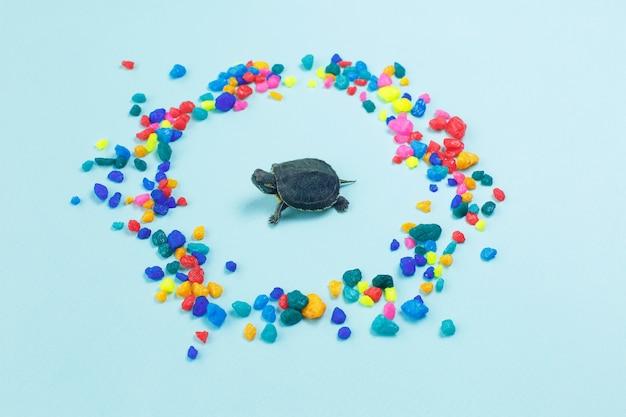 Mały żółw otoczony kolorowymi kamieniami morskimi