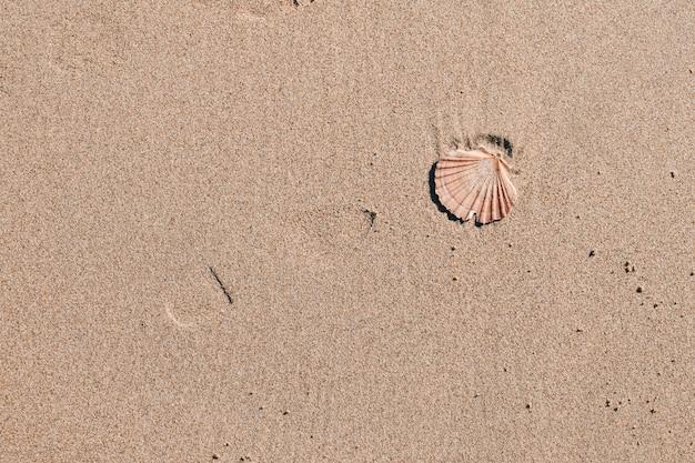 Małż w piasku morskim
