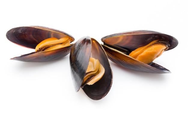 Małże na białym tle na białej powierzchni. owoce morza.