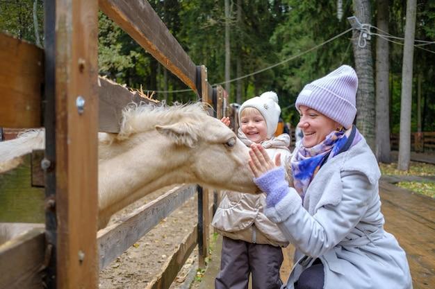 Mama i córka głaskają twarz źrebaka wystawiającego głowę zza płotu w zoo. ludzie śmieją się z przyjemnością. przyjaźń ludzi i zwierząt.