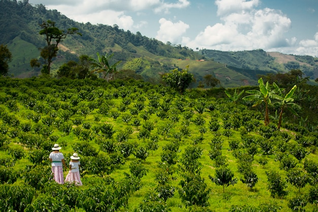 Mama i córka zbierają ziarna kawy w kolumbii