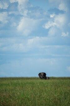 Mama i słoniątko w serengeti