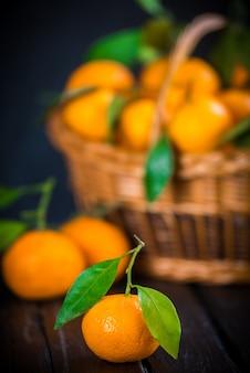Mandarynki, pomarańcze, mandarynki, klementynki, owoce cytrusowe, z liśćmi w koszu na rustykalnym drewnianym ciemnym tle, kopia przestrzeń.