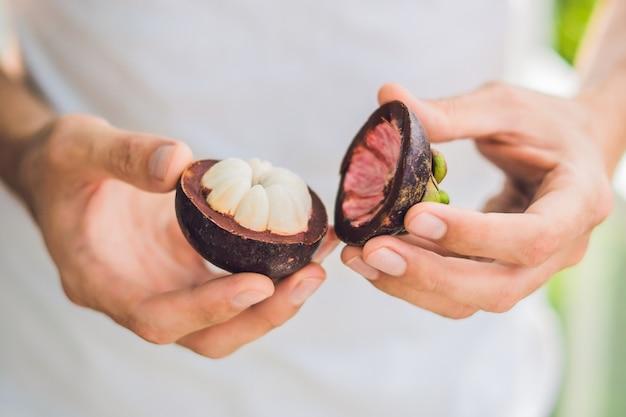 Mangostan na dłoni rolnika trzymać owoce tropikalne