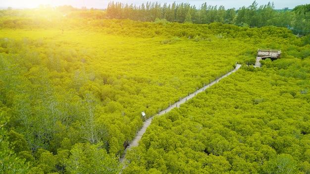 Mangrowe intung prong thong lub golden mangrove field w estuary pra sae, rayong, tajlandia