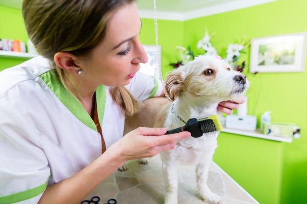 Manicure dla psa w zwierzę domowe uwalnia salonie