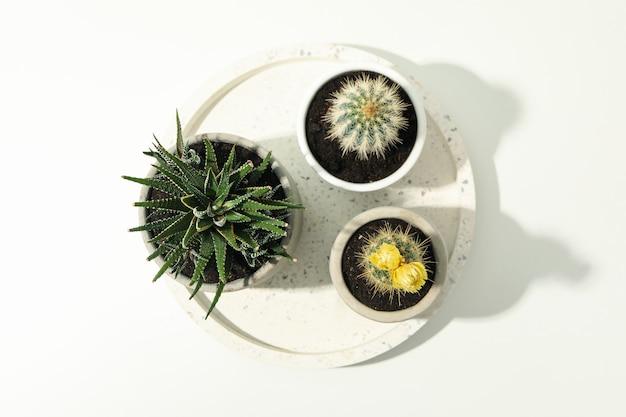 Marmurowa taca z sukulentami na białej powierzchni. rośliny domowe