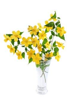 Marsh marigold yellow polne kwiaty w wazonie na białym tle.