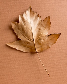 Martwa natura monochromatyczna z liściem
