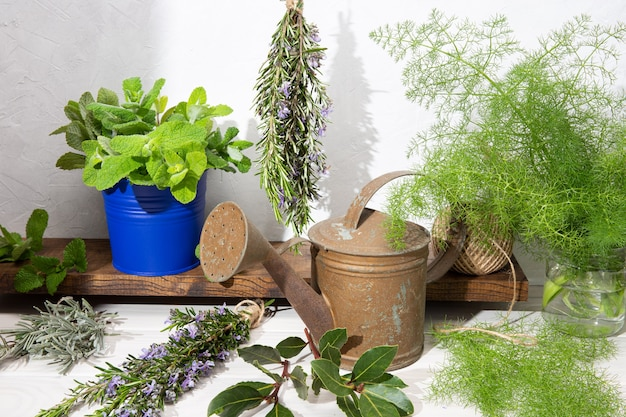 Martwa natura z aromatycznych ziół na drewnianym stole i konewka