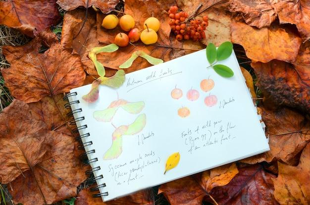 Martwa natura z jesiennymi dzikimi owocami i notatnikiem z rysunkami owoców klonu