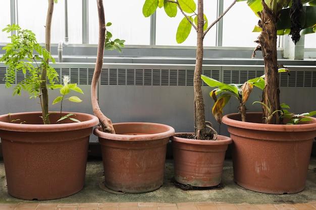 Martwa natura z koncepcją ogrodnictwa