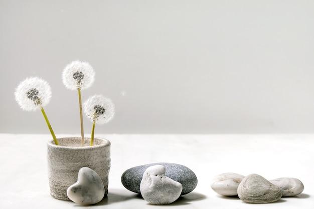 Martwa natura z kwitnącymi puszystymi kwiatami mniszka lekarskiego w ręcznie robionym ceramicznym garnku z gładkimi kamieniami na białym marmurowym tle pojęcie czystości lekkości