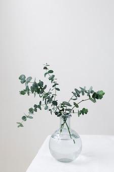 Martwa natura z rośliną w pomieszczeniu