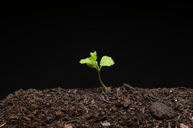Martwa natura z rosnącej sadzonki