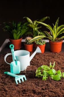 Martwa natura z różnych roślin na glebie