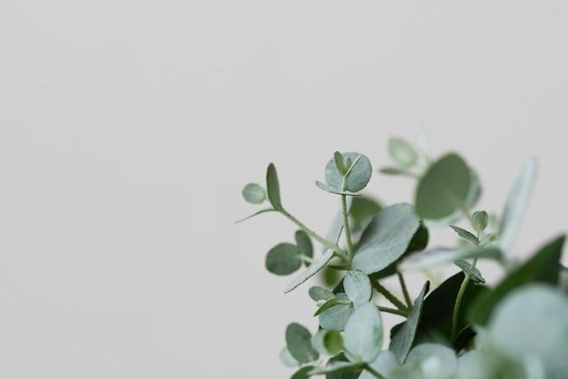 Martwa natura z zielonymi roślinami w pomieszczeniu