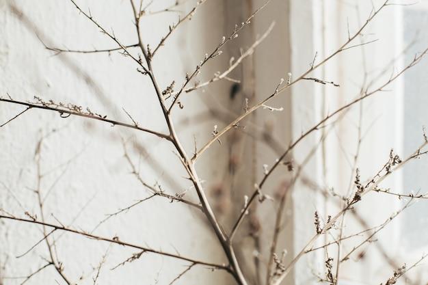 Martwa natura. zdjęcie suchej gałęzi na widok z boku starego rocznika okna