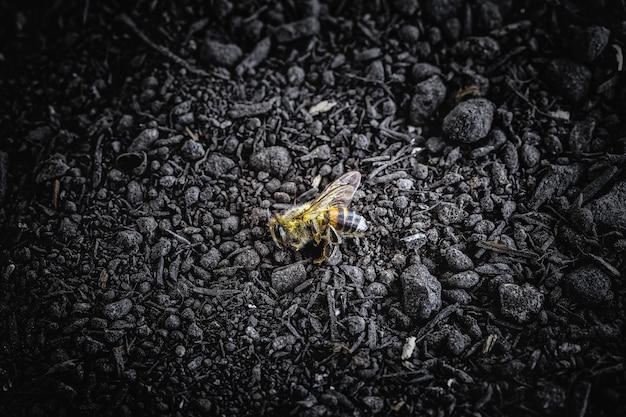 Martwa pszczoła spadła na ziemię po zastosowaniu pestycydów