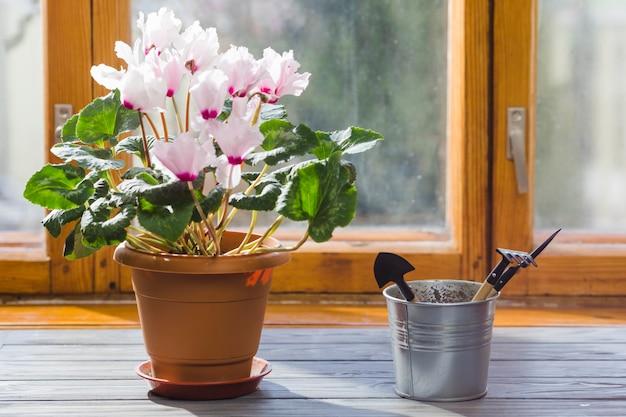 Martwa roślina i ogród