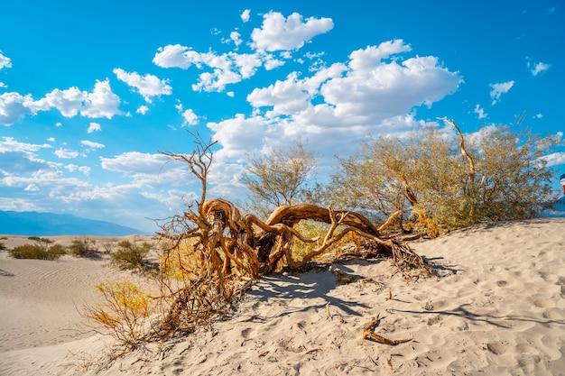Martwe drzewo na pięknej pustyni w dolinie śmierci w kalifornii. stany zjednoczone