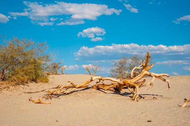 Martwe drzewo na pustyni death valley w kalifornii. stany zjednoczone