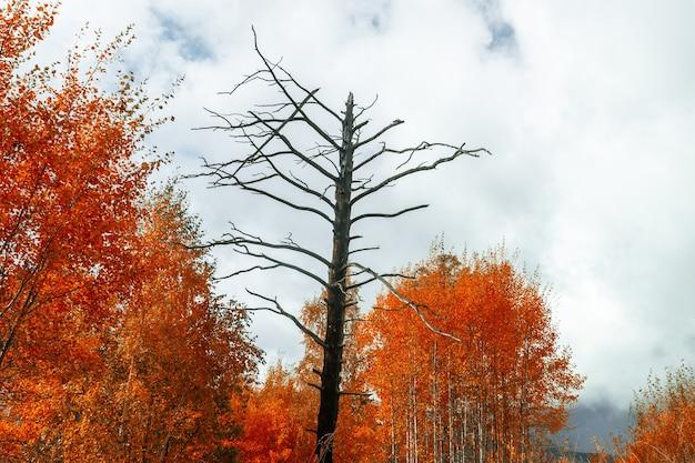Martwe drzewo otoczone jesiennym lasem. koncepcja jesiennej depresji. pojęcie samotności.