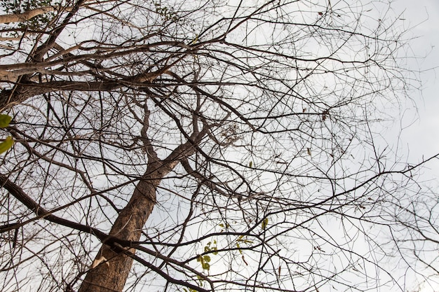 Martwe drzewo stojące tło błękitne niebo i chmury.