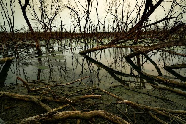 Martwe drzewo w zalanym lesie. kryzys środowiskowy spowodowany zmianami klimatu. ciemne tło śmierci, smutek i beznadziejność. katastrofa spowodowana wylesianiem. martwe drzewo z powodu problemu zmian klimatycznych. smutna natura.