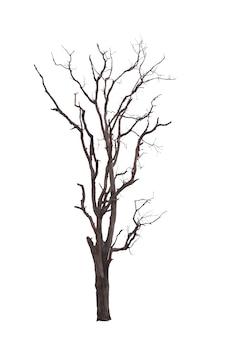 Martwe drzewo z suchej sceny izolować na białym tle