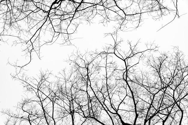 Martwe gałęzie