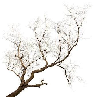 Martwe i suche drzewo na białym tle