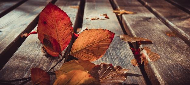 Martwe liście na ławce. motyw jesieni i jesieni