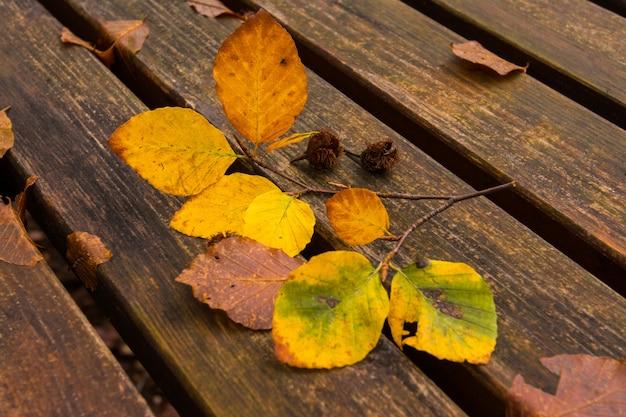 Martwe liście na ławce.