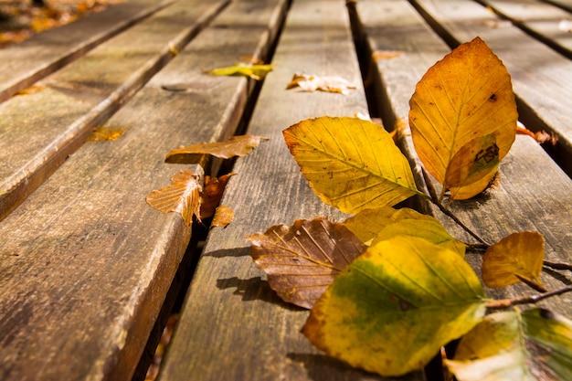 Martwe liście na tle ławki, jesień i jesień
