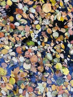 Martwe opadłe liście unoszące się na powierzchni wody