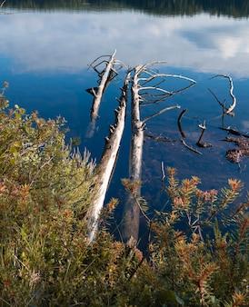 Martwe suche pnie drzew w jeziorze