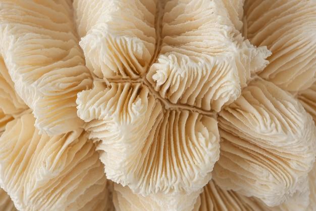 Martwy biały koral szkielet szczegół jako tło