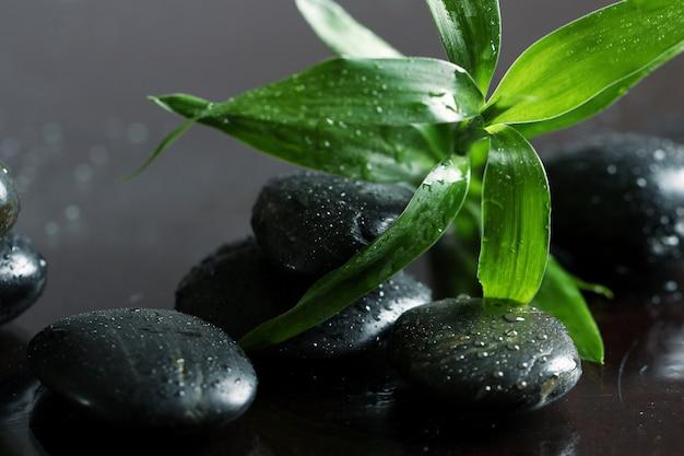 Masuj kamienie i liście bambusa