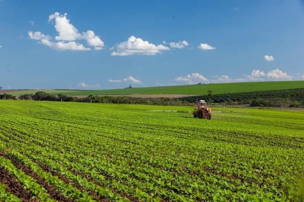 Maszyna pracująca w polu orzechowym pod błękitnym niebem. rolnictwo.