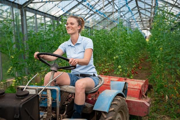 Maszynowa obróbka warzyw w szklarni