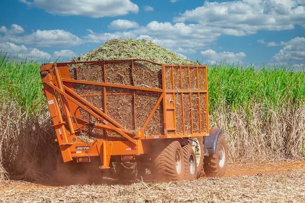 Maszyny do zbioru plantacji trzciny cukrowej