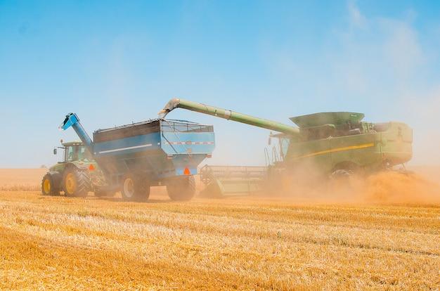 Maszyny rolnicze zbierają plon pszenicy żółtej na otwartym polu w słoneczny, jasny dzień