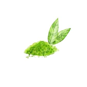 Matcha w proszku i liści zielonej herbaty na białym tle