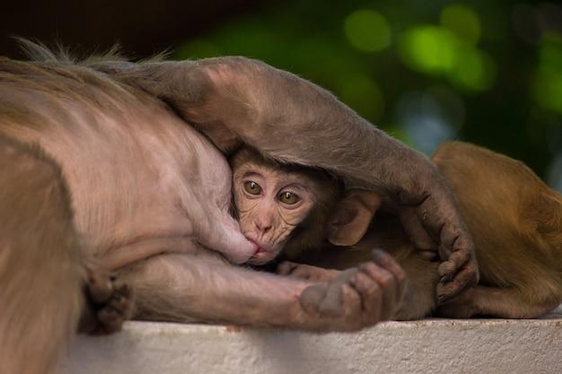 Matka i dziecko małpa