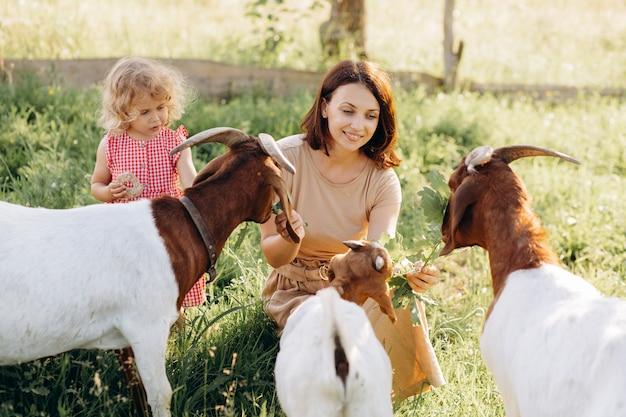 Matka i jej piękna, kręcona córka pasą kozy na ekologicznej farmie
