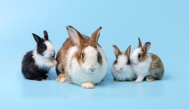 Matka królik i trzy słodkie króliczki na niebieskim tle. koncepcja rodziny zwierząt domowych.