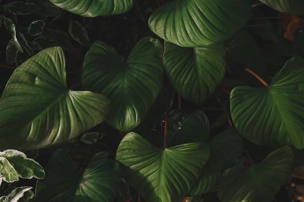 Matowa tropikalna zieleń opuszcza tło