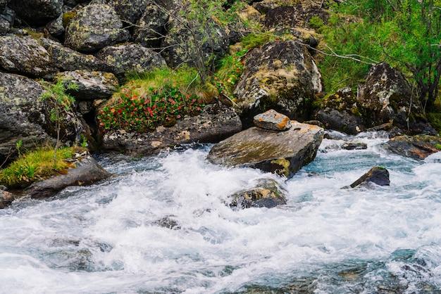 Mchy i porosty oraz bogata roślinność na kamieniach i głazach w pobliżu górskiego potoku.